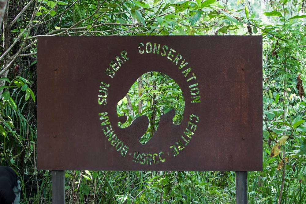 At the moment, 43 sun bears live at the Bornean Sun Bear Conservation Centre (BSBCC), which was established in Sabah, Malaysia, in 2008. It focuses on the welfare, rehabilitation, education and research of sun bears.