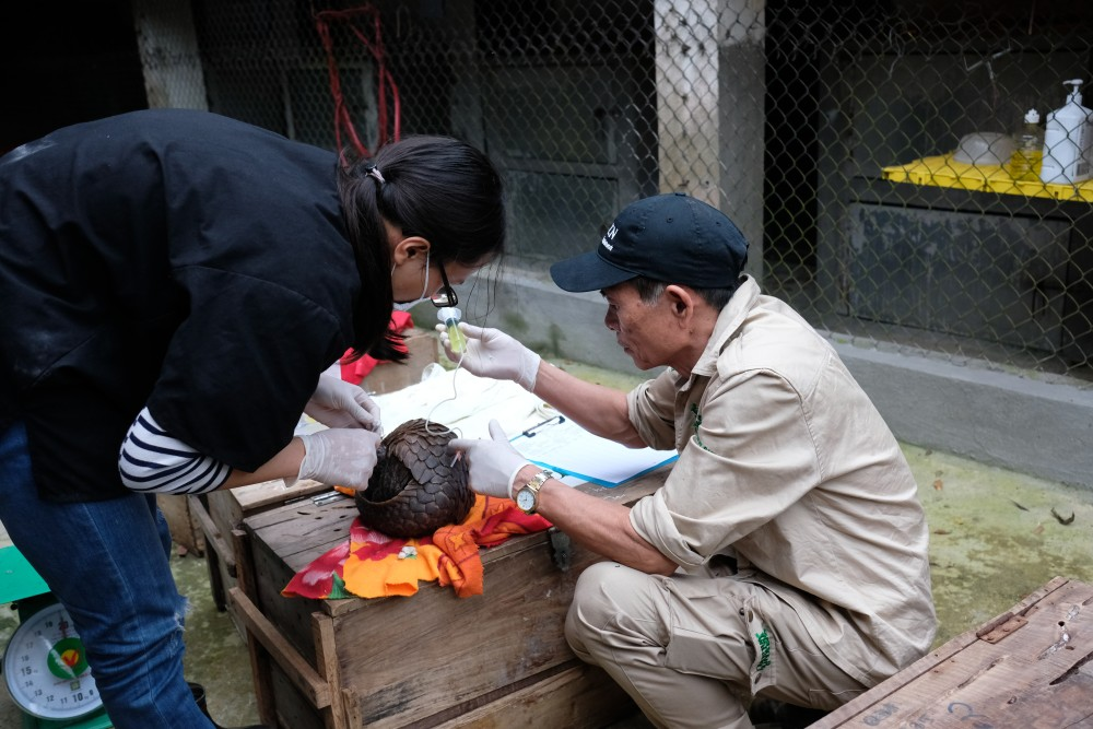 The process requires more hands than are available and often, Tham, and other keepers step in to assist the vets.