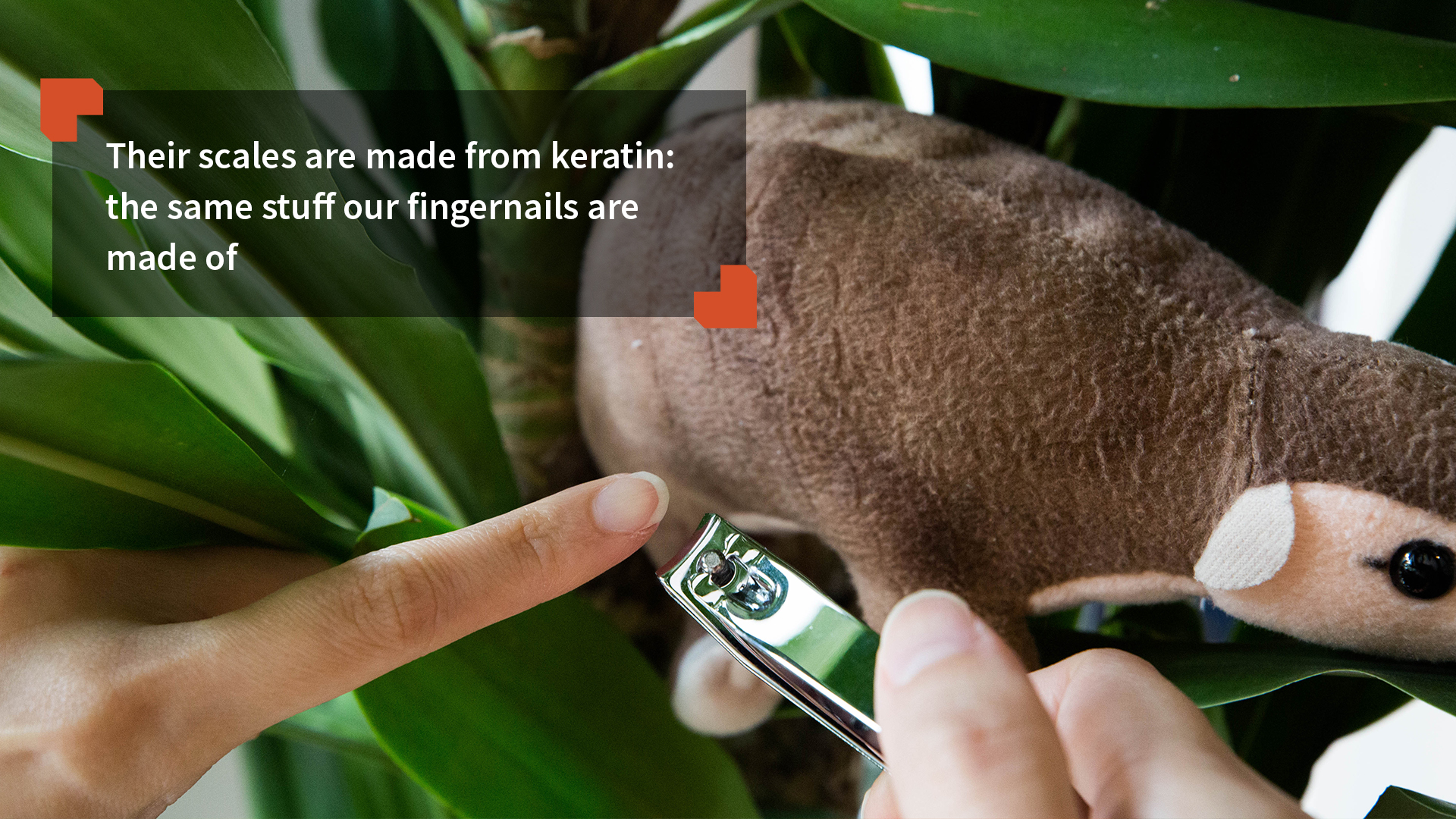 Their scales are made from keratin: the same stuff our fingernails are made of