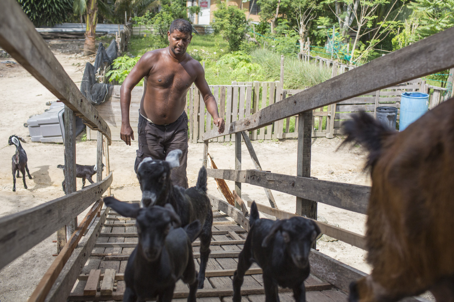 After his stint at Positive Living, Selva hopes to set up his own farm in the long run. He developed a keen passion for rearing goats after caring for the ones at PLC.